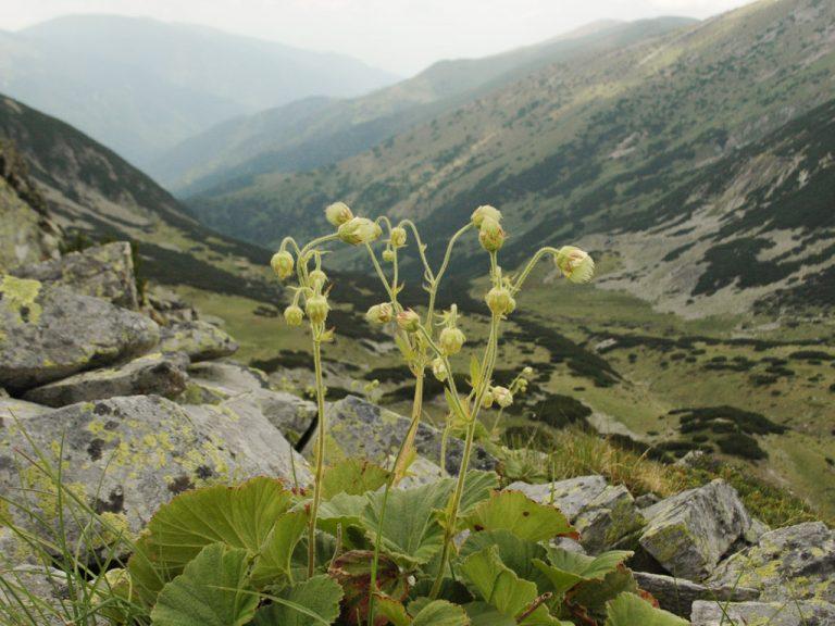 Botany tours in Bulgaria