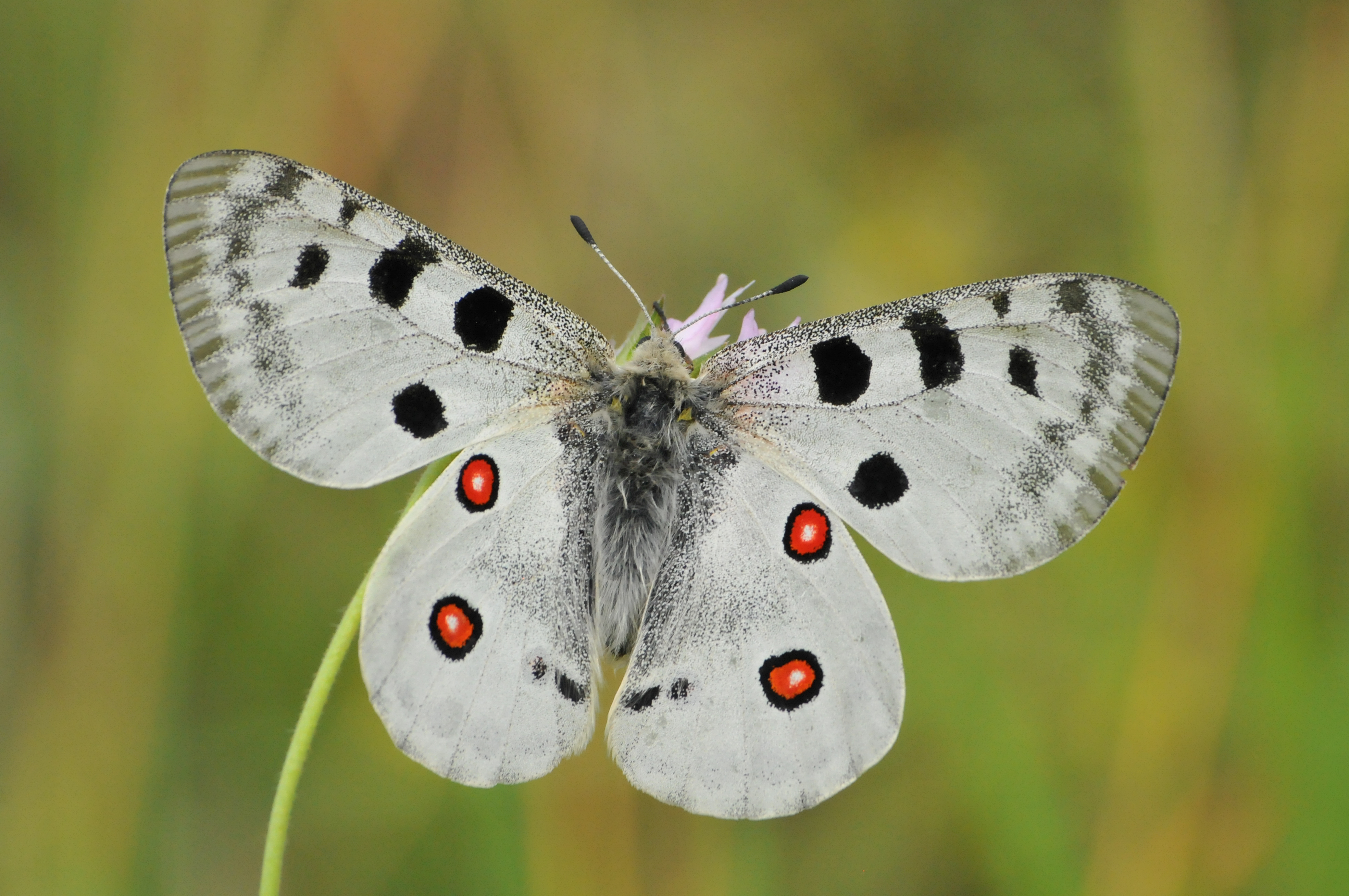 Butterfly tours in Bulgaria