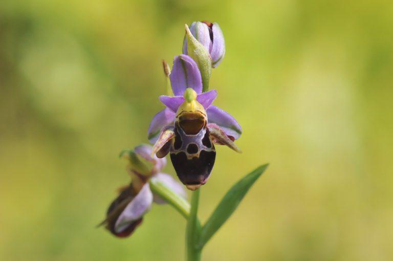 Spring botanical tour in Bulgaria