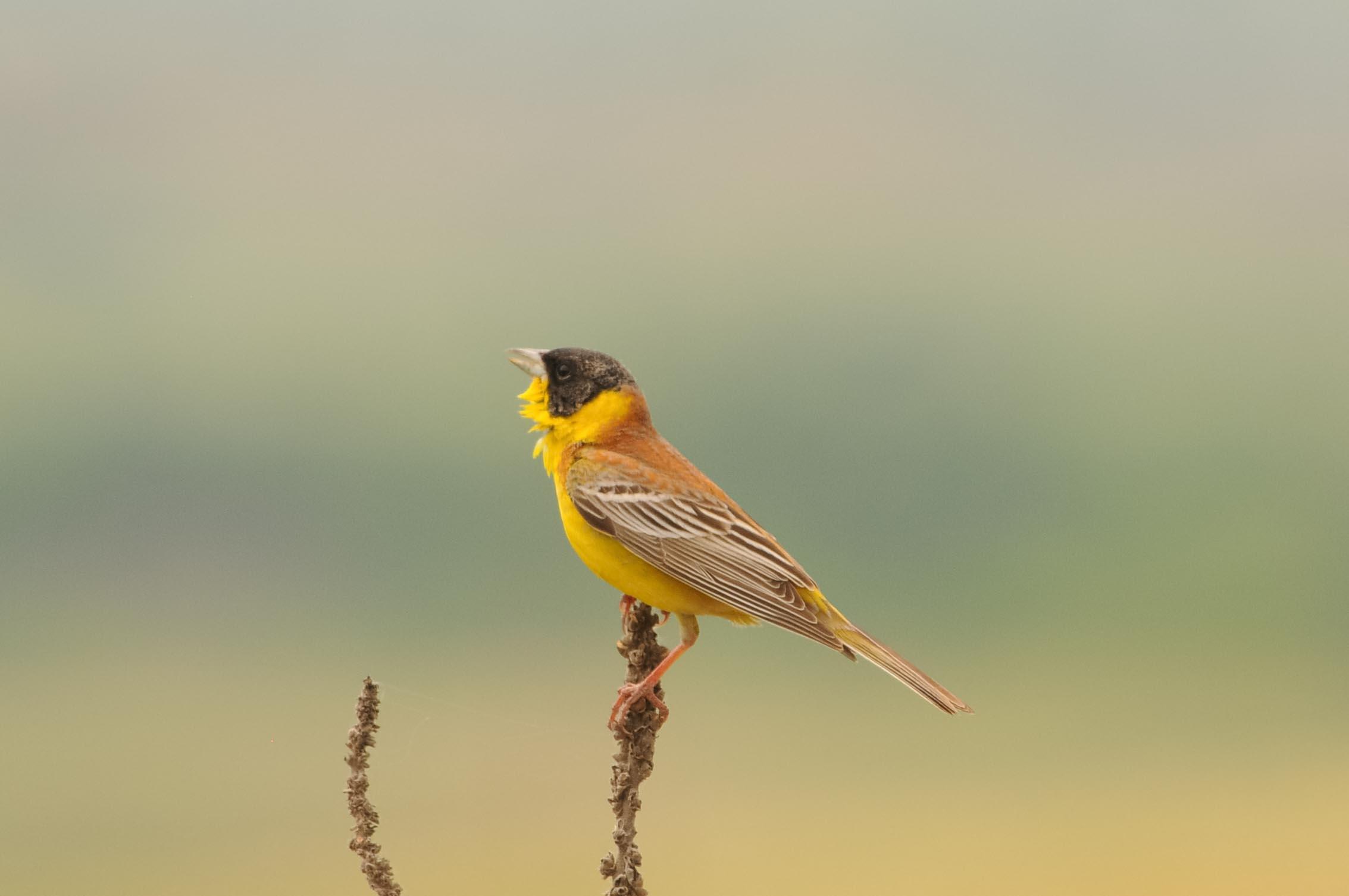 Birdwatching tours in Bulgaria