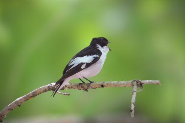 Spring birding tour